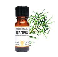 Brown glass bottle with black cap shown in front of tea tree foliage, white label shows amphora tea tree essential oil