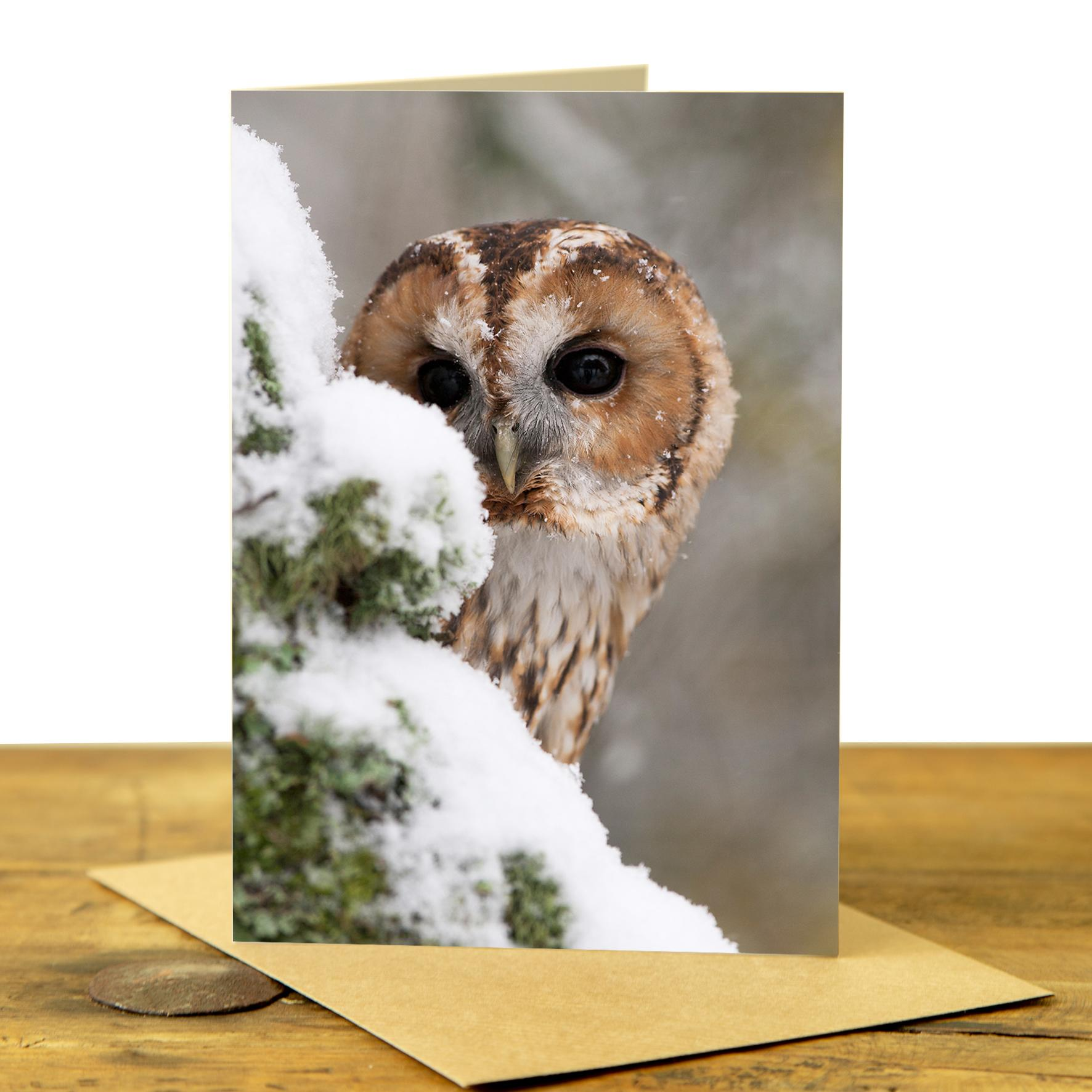 Card - Tawny Owl in the Snow