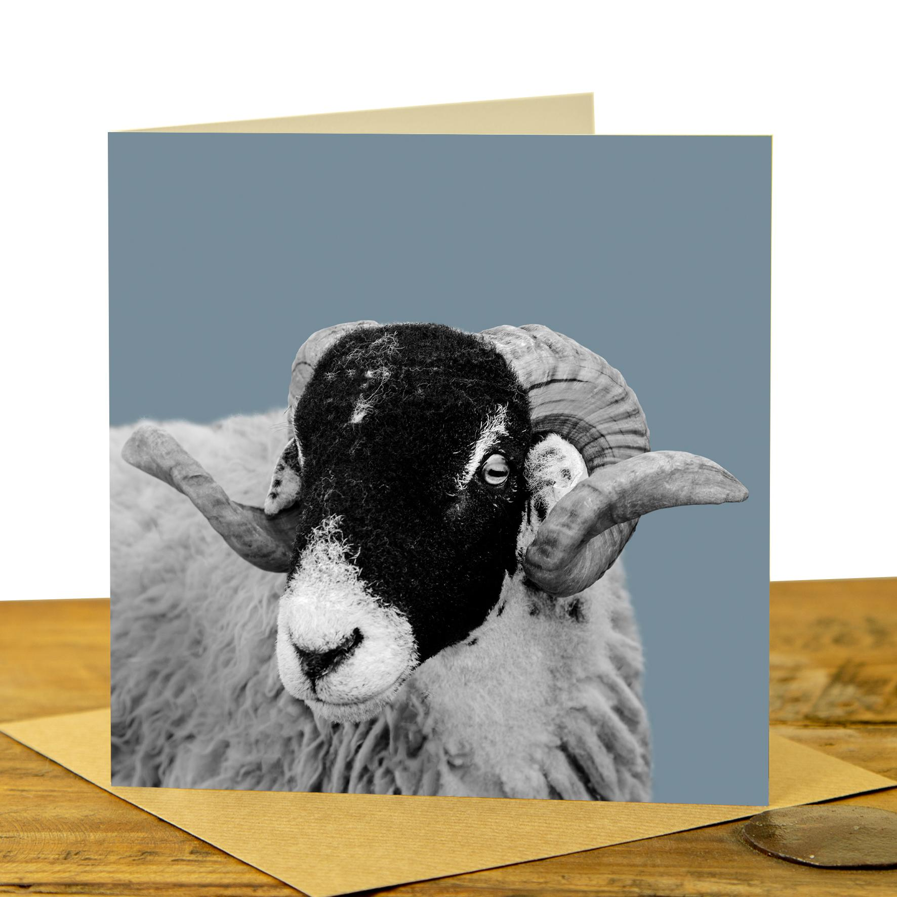 Card - Swaledale Sheep on Pale Blue