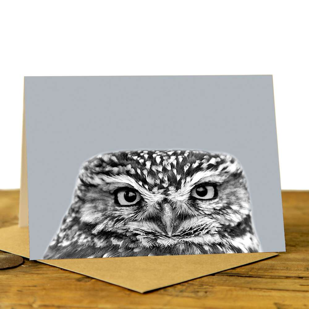 Owl Card - Little Owl on Pale Grey