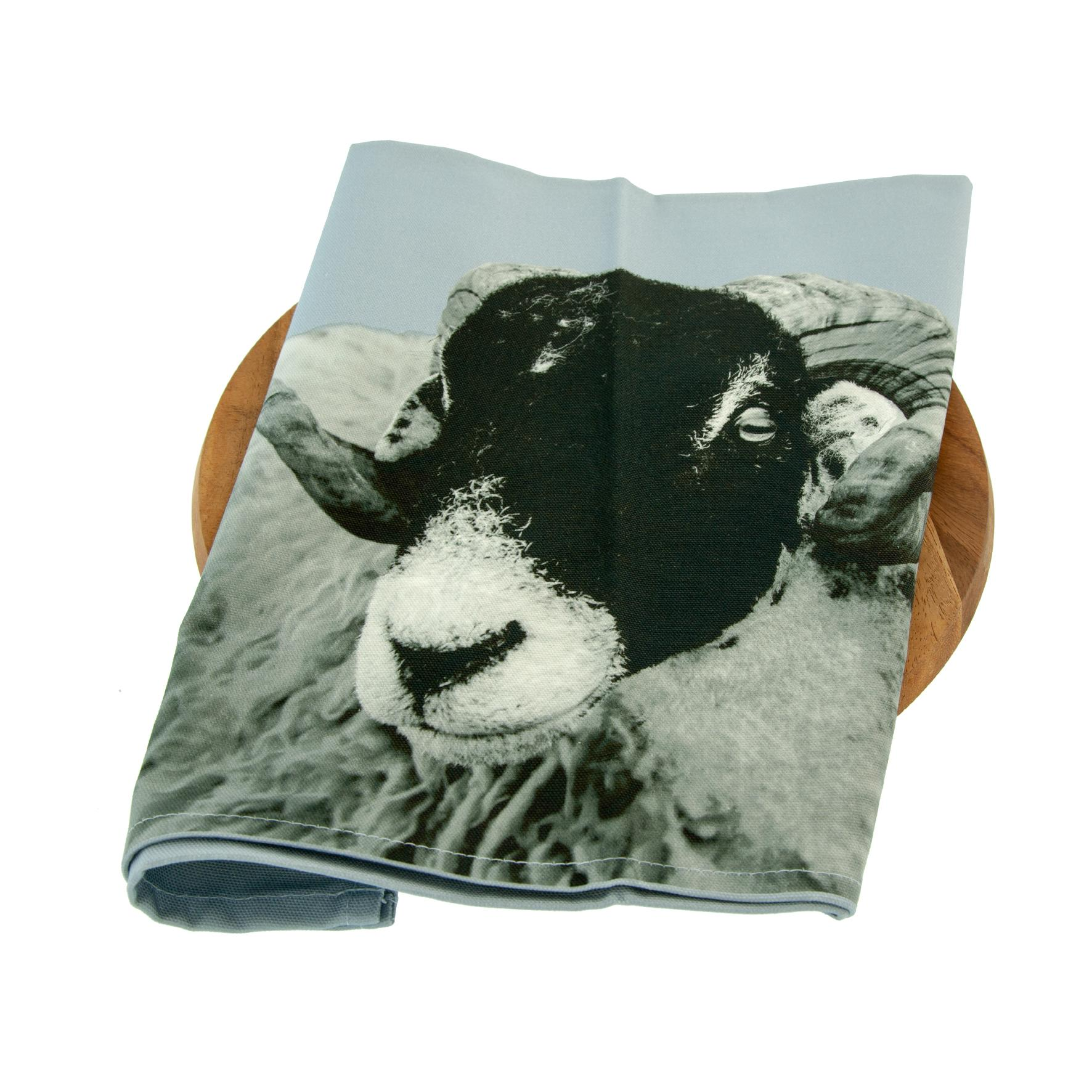 Swaledale sheep on pale grey