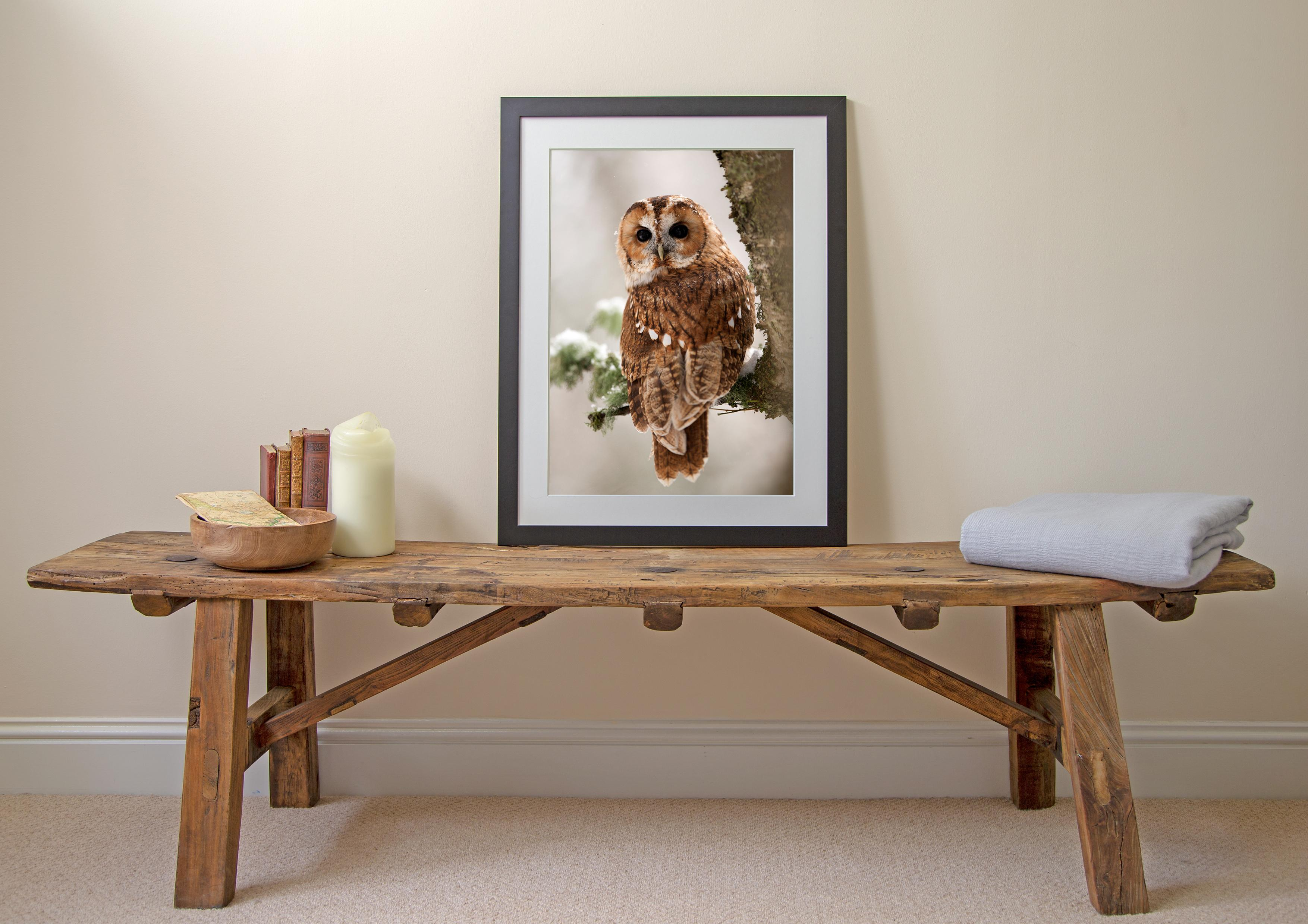 Tawny Owl Looking Back Print 2