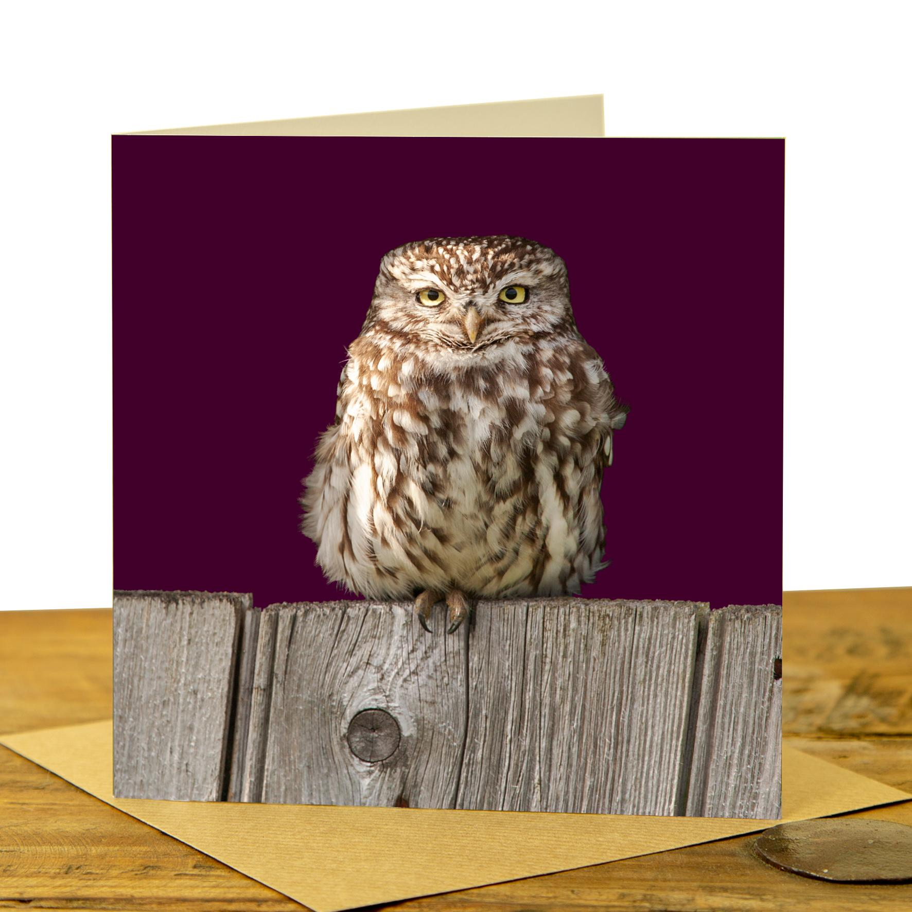 Little Owl on Fence Card - Claret