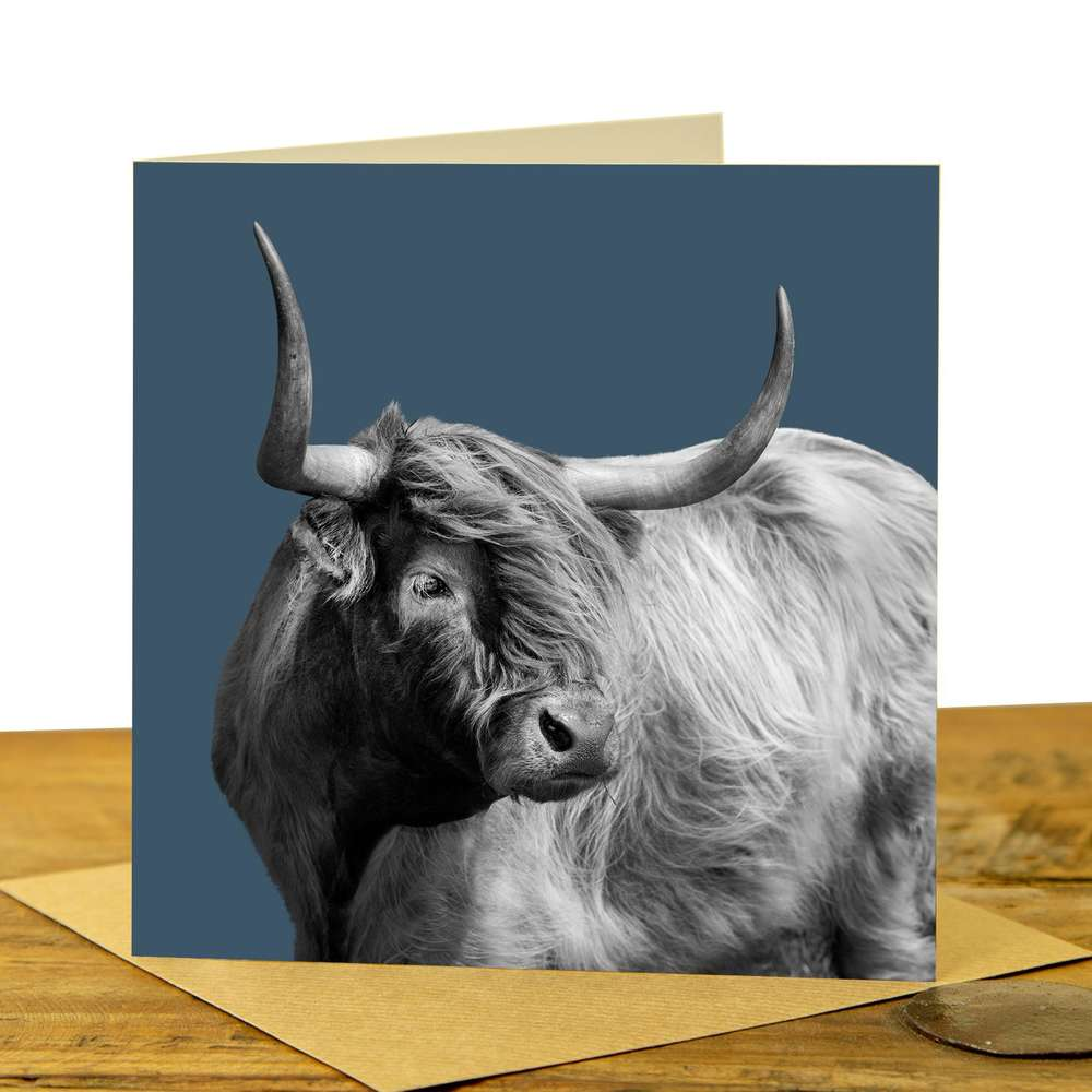 Card - Highland Cow on Indigo