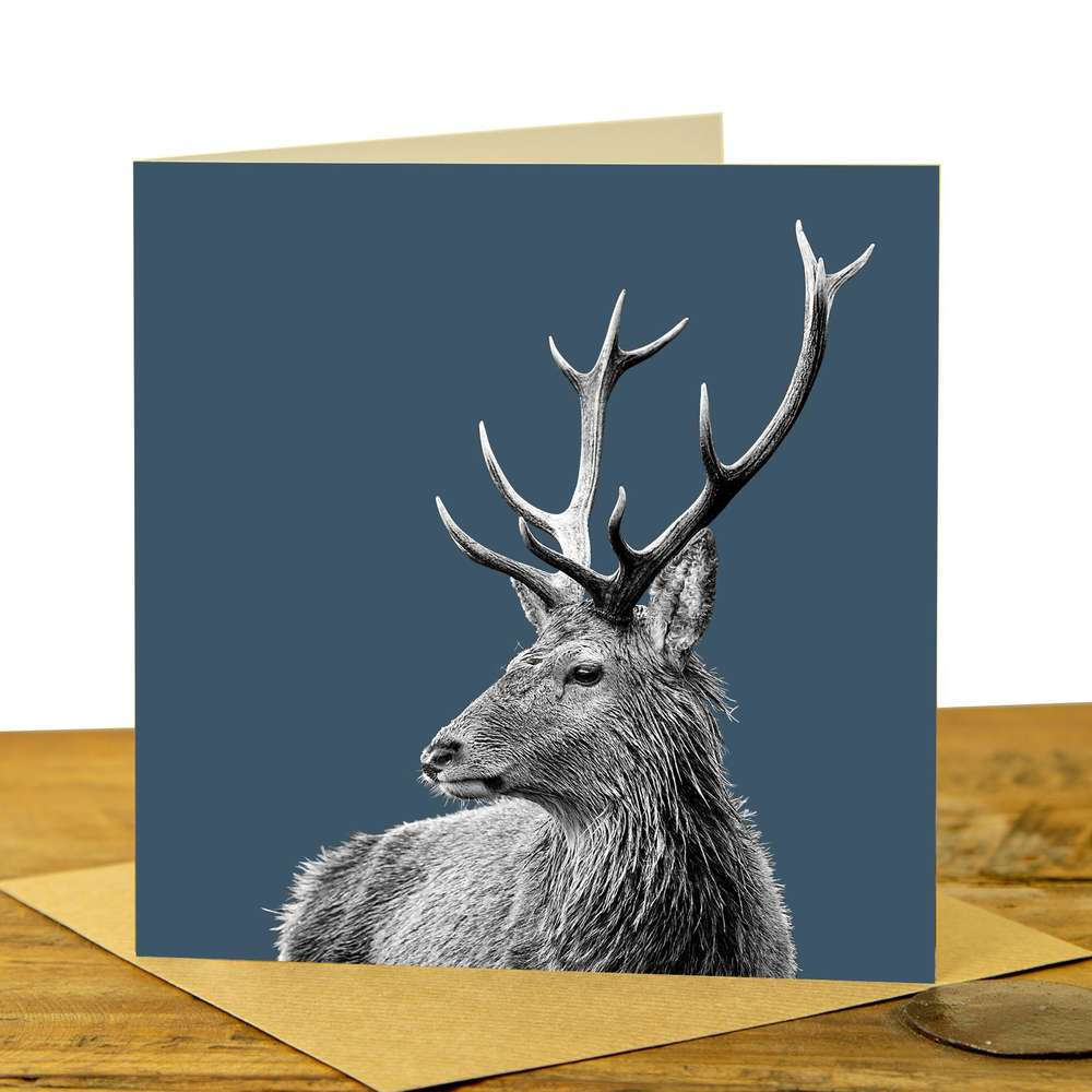 Card - Highland Stag on Indigo