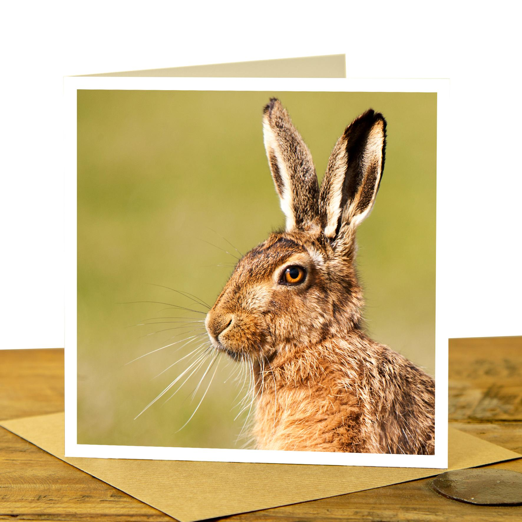 Card - Brown Hare Portrait