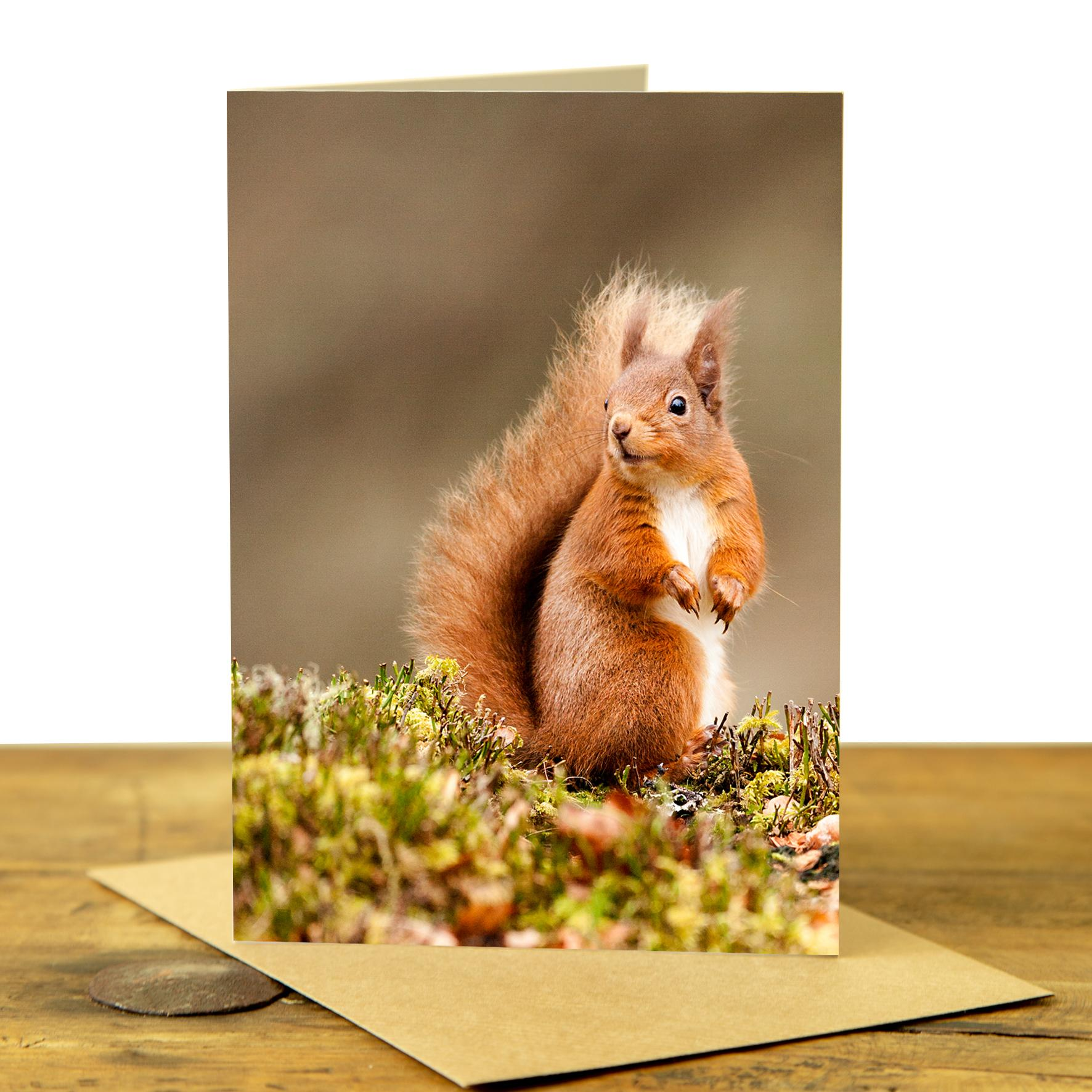 Card - Red Squirrel on the Ground