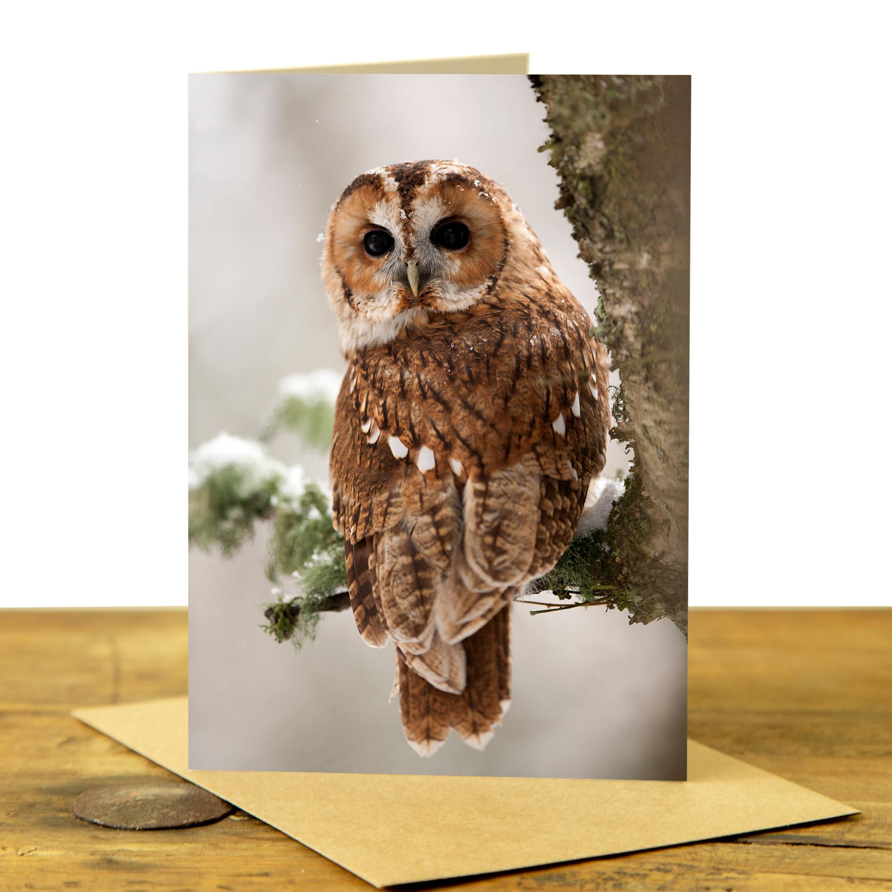 Card - Tawny Owl Looking Back