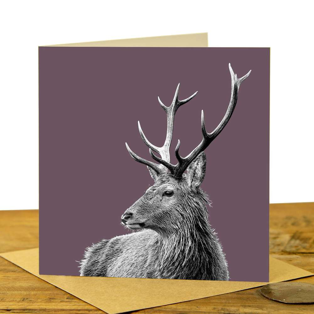 Card - Highland Stag on Dusky Pink