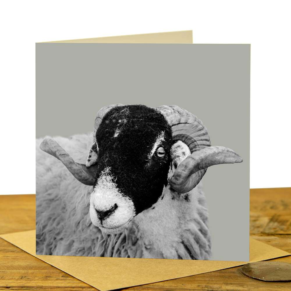 Card - Swaledale Sheep on Sage Grey