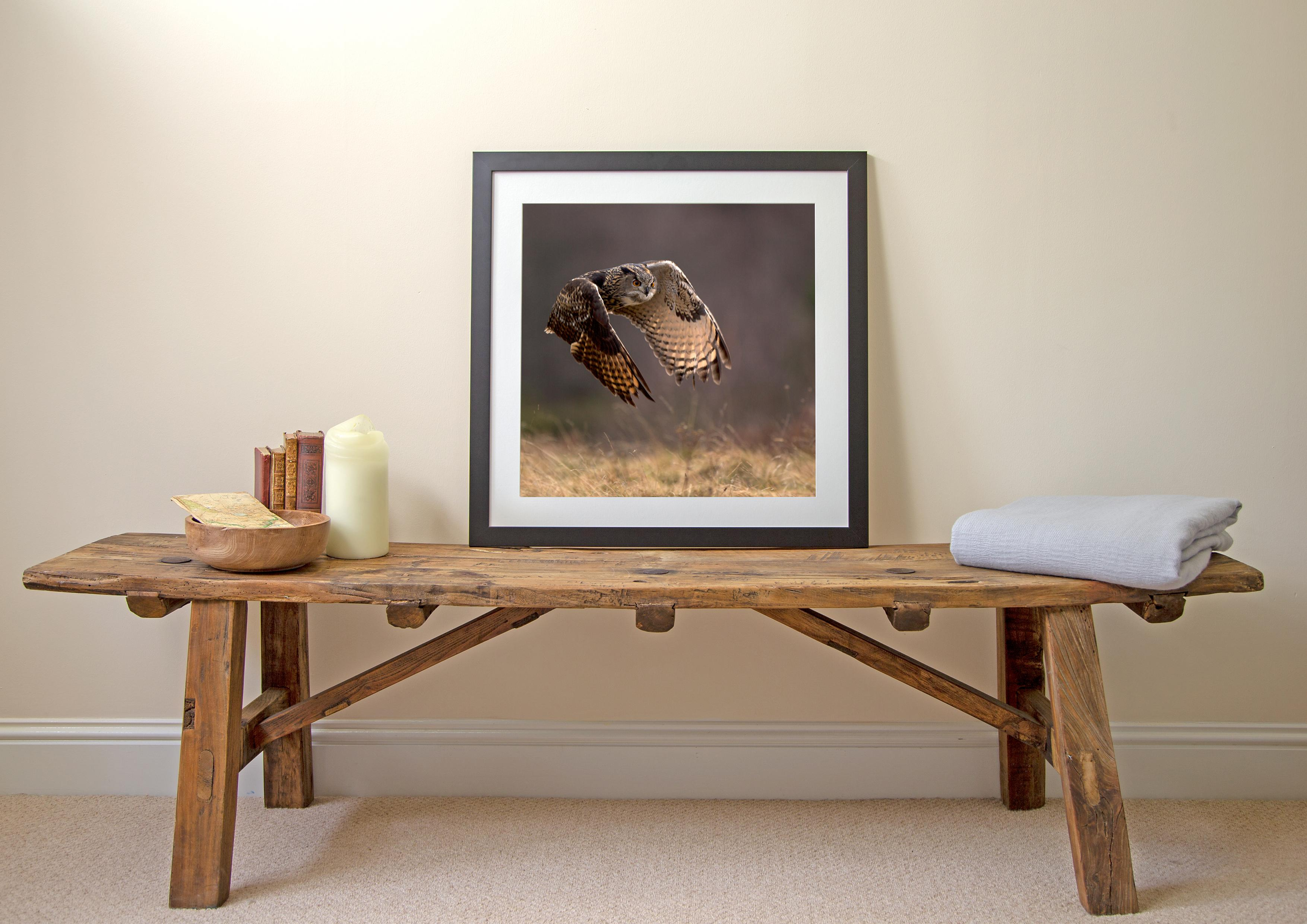 Eagle Owl - Framed Print