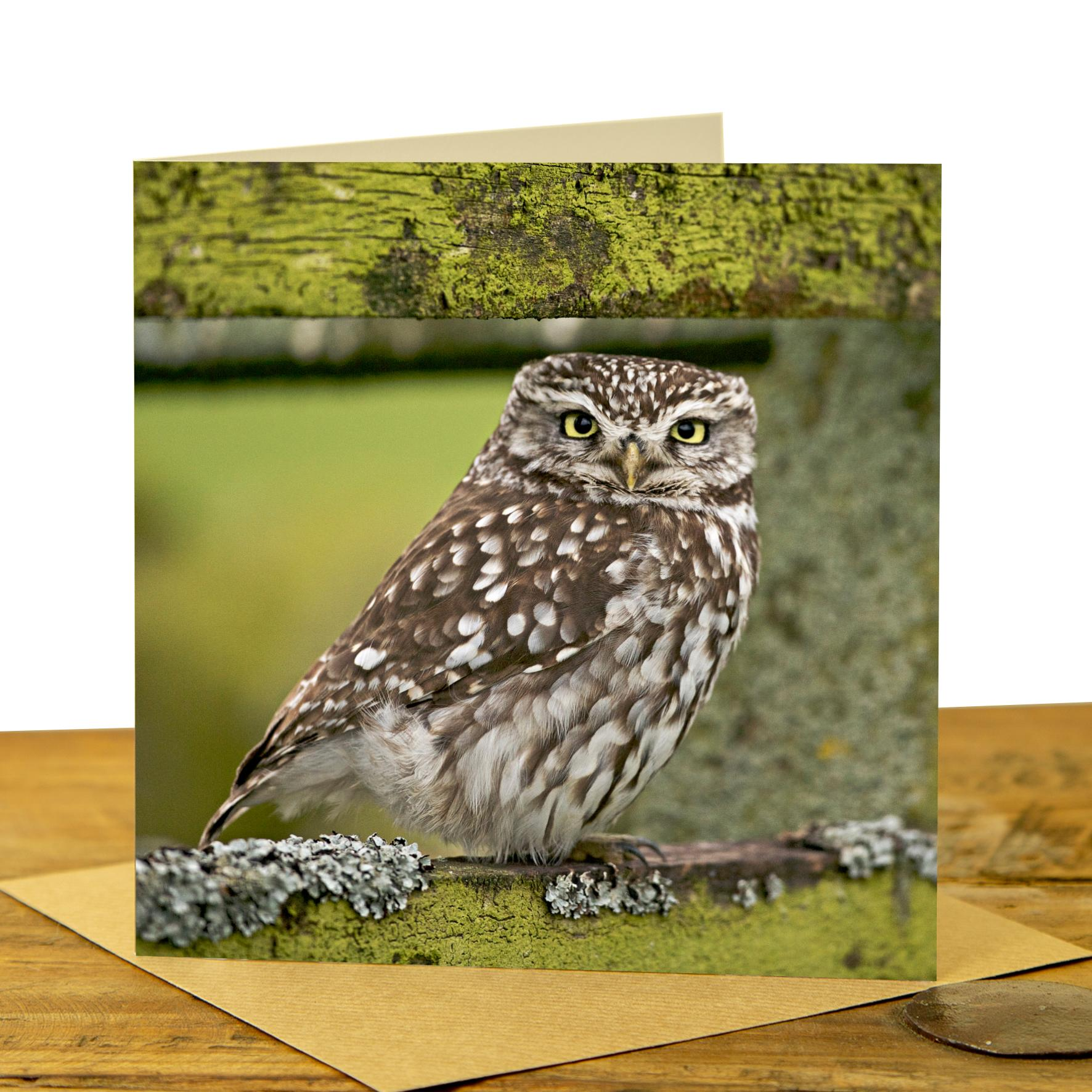Little Owl on Fence card