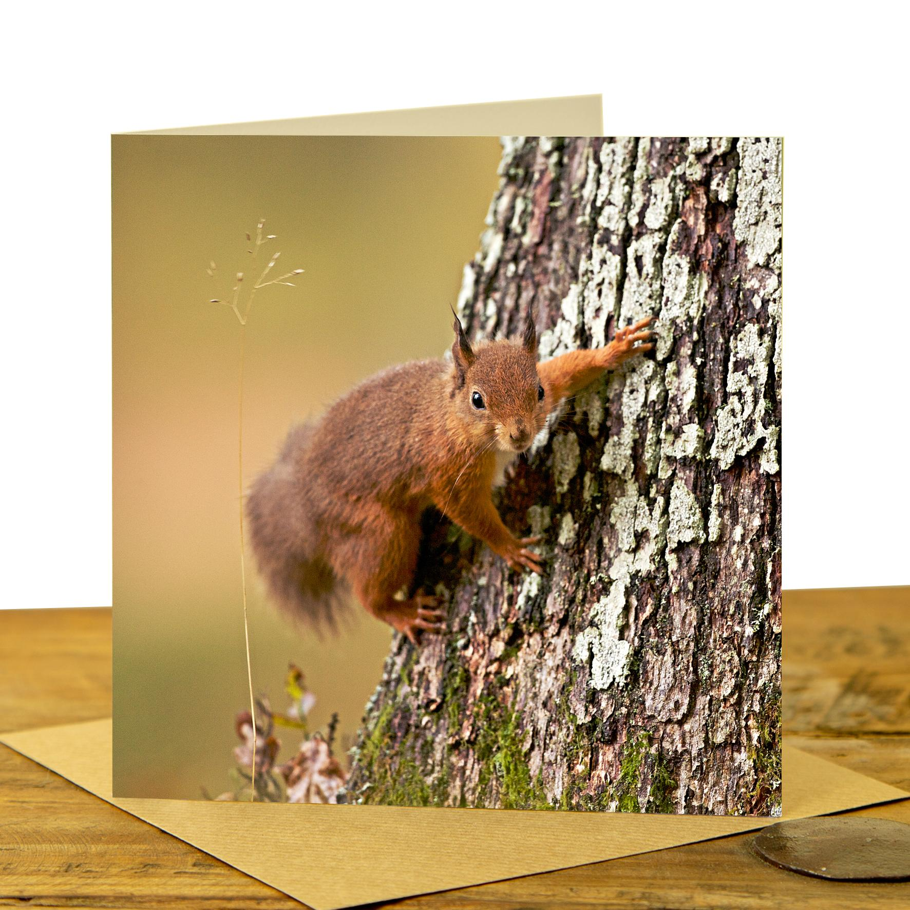 Card - Red Squirrel on Tree