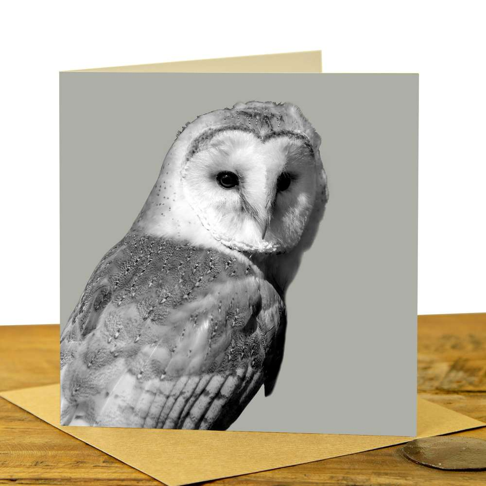 Owl Card - Barn `Owl on Sage Grey