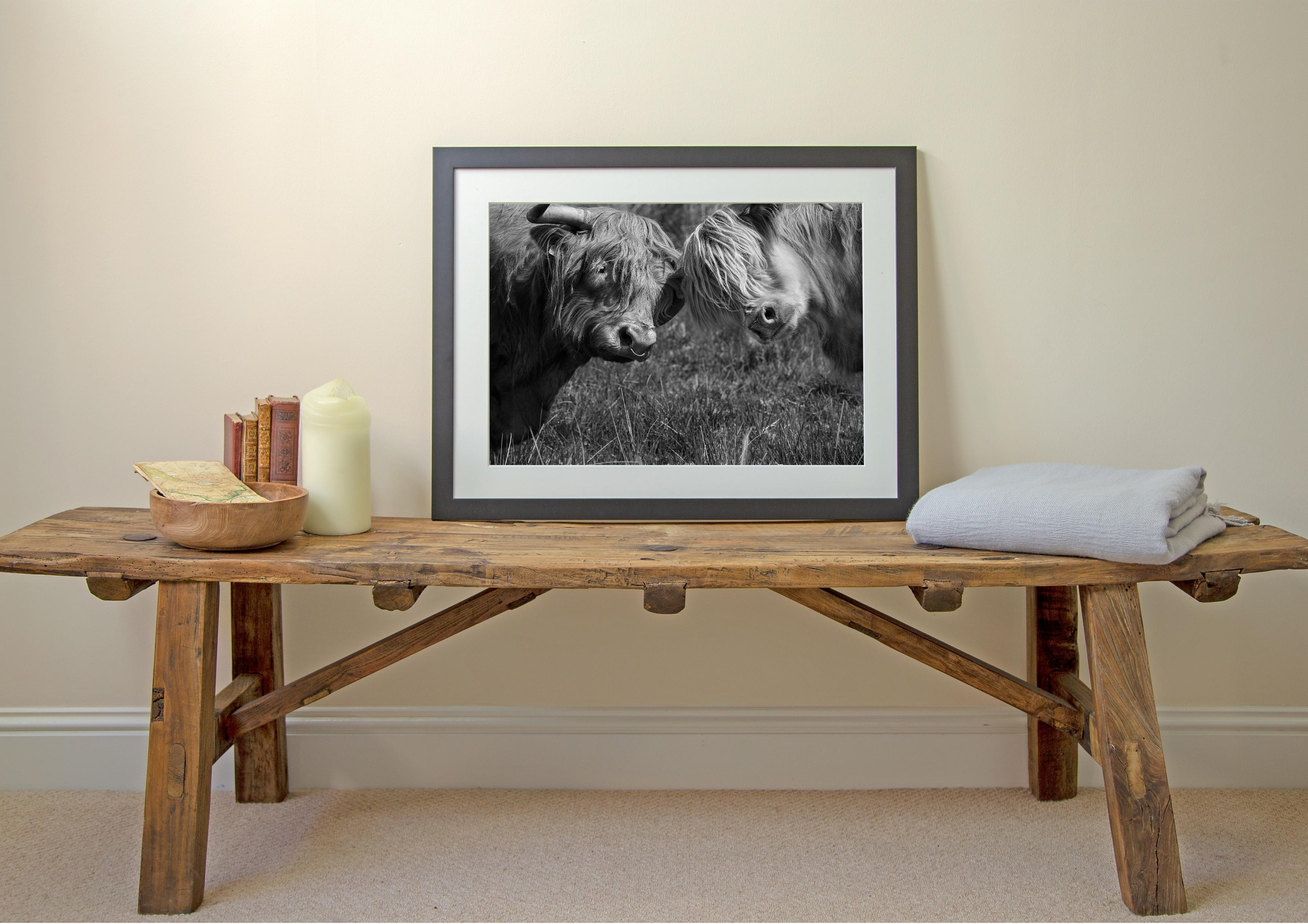 Highland Cows Print - Mr and Mrs