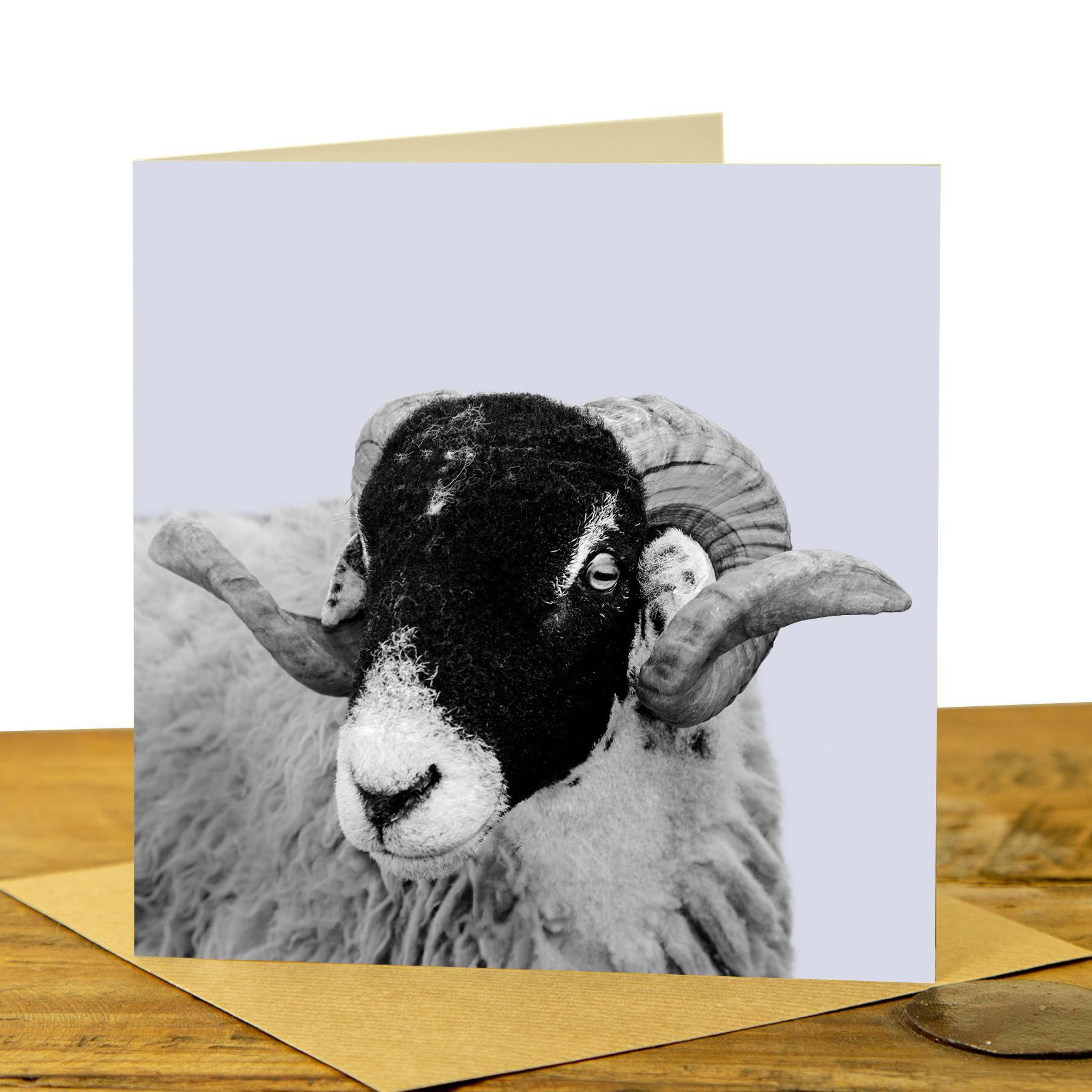 Card - Swaledale Sheep on Pale Lavender