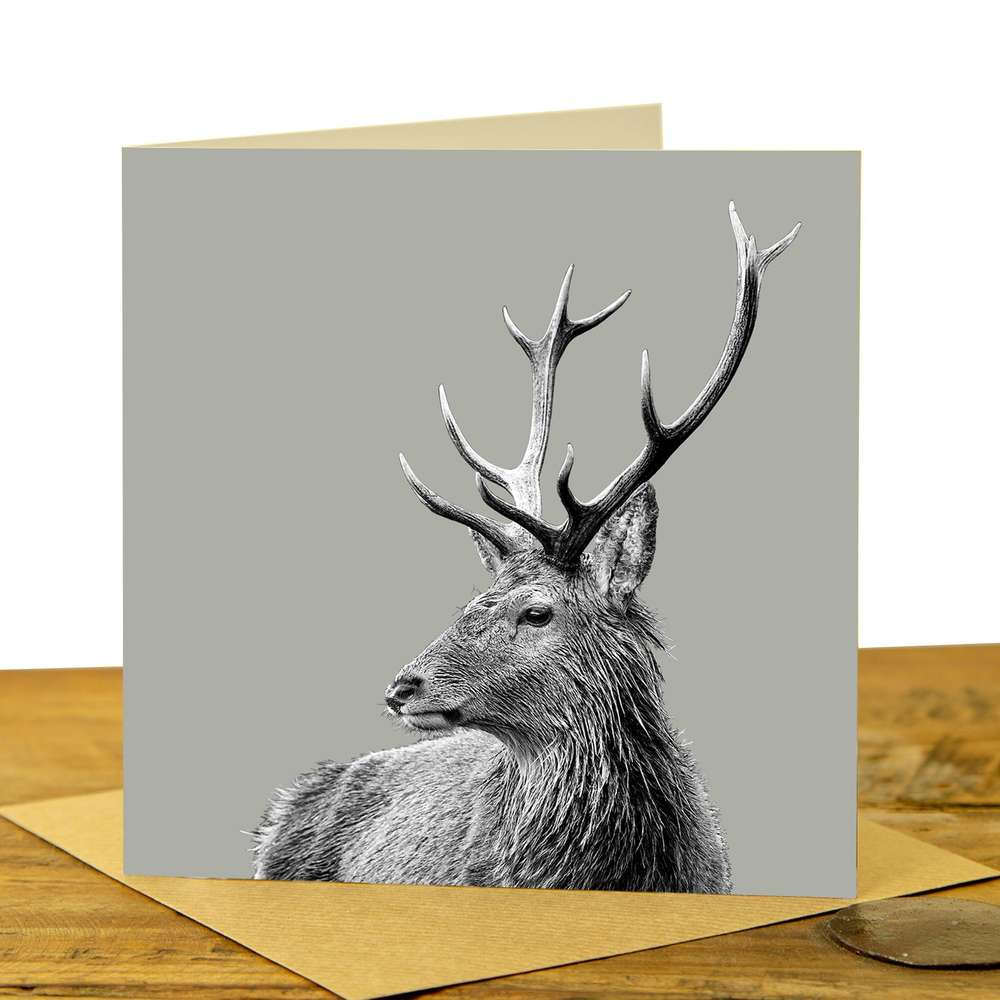 Card - Highland Stag on Sage Grey
