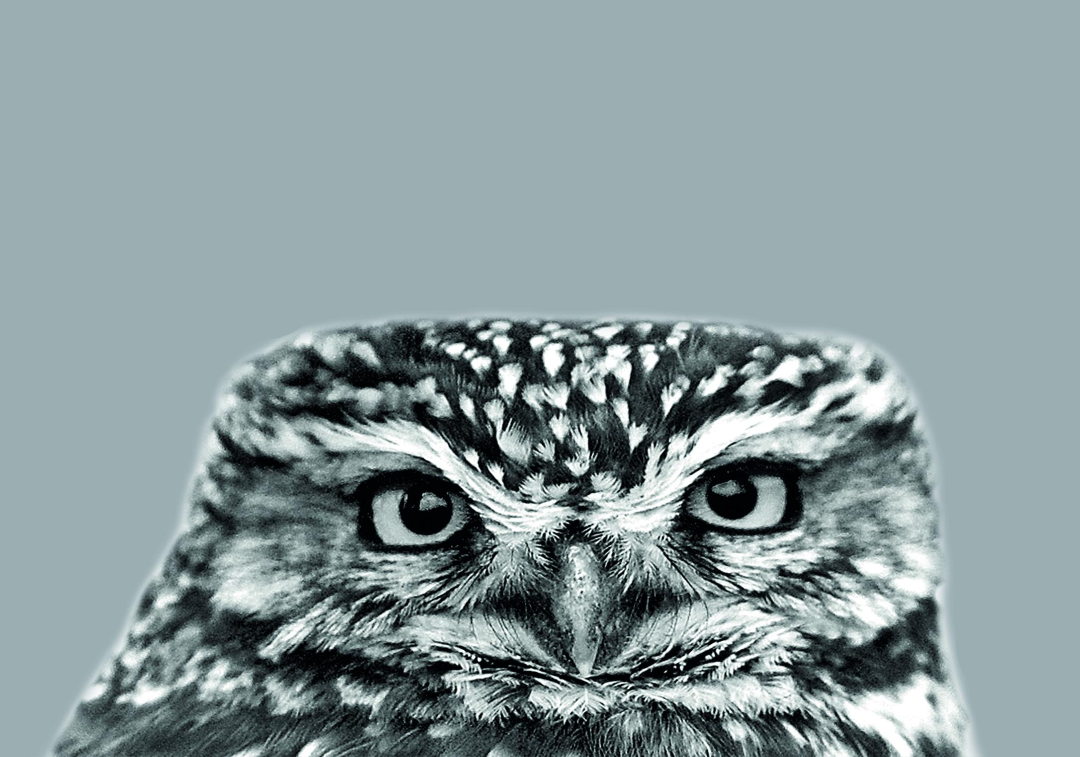 7 x 5 Card - Little Owl on Pale Grey