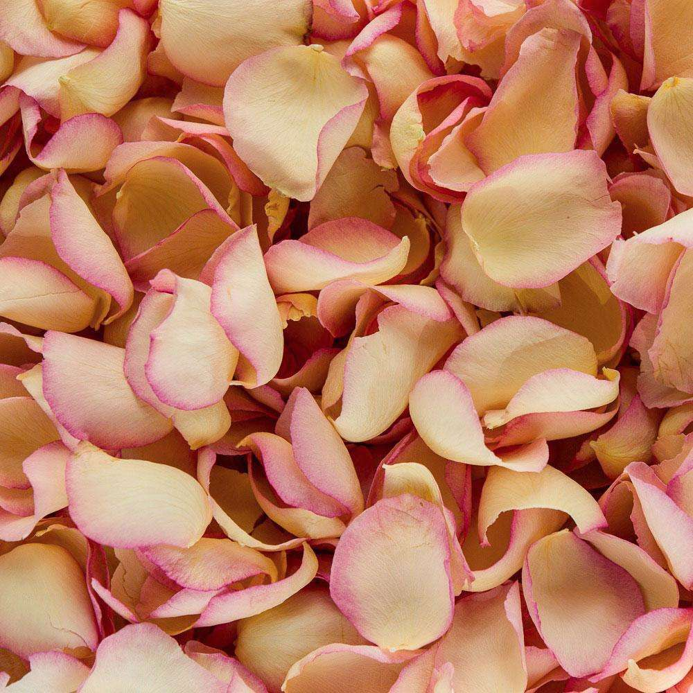 Real Rose petal confetti