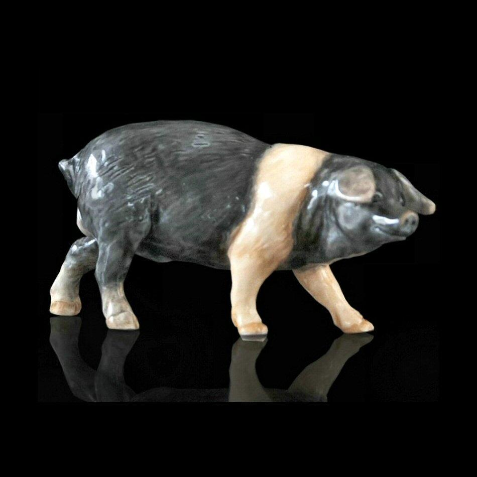 Pig (114BC) - by Keith Sherwin