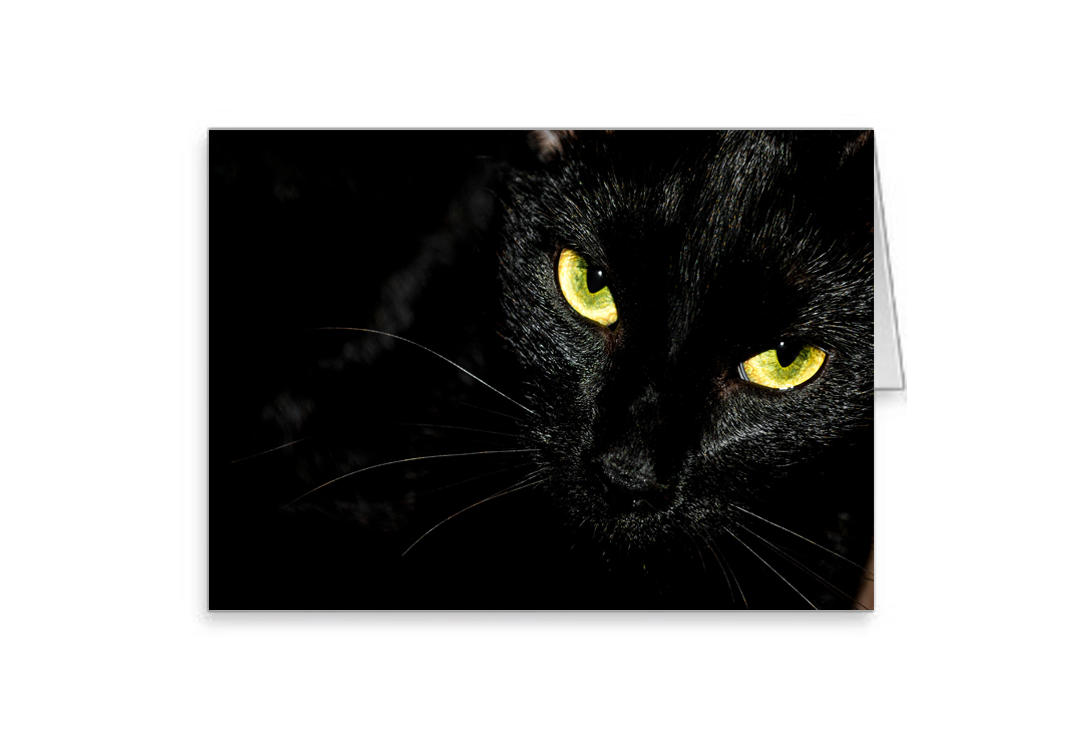 Void Clothing | Black Cat Greetings Card