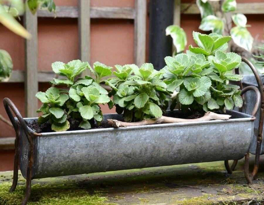 metal_zinc_window_box_planter_trough_garden_indoor_outdoor_vintage_galvanised_zinc
