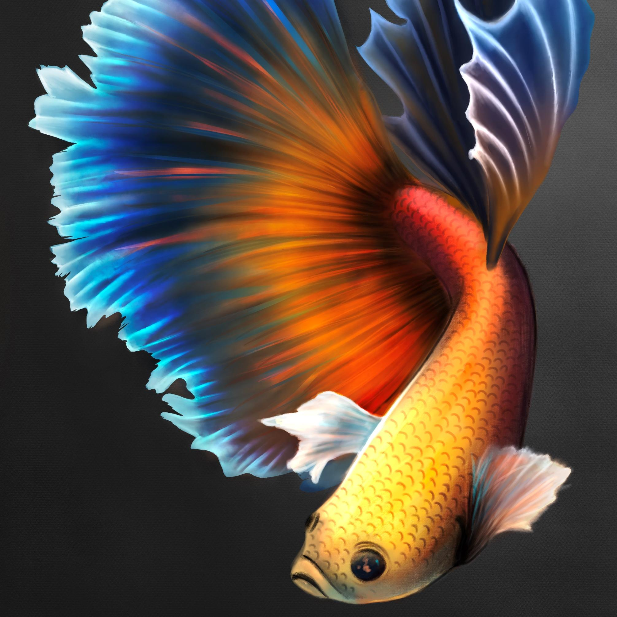A digital painting by Lily Bourne of a colourful freshwater fish called Betta Splendums. Found in Thailand and present in neighboring Cambodia, Laos, Malaysia, and Vietnam.