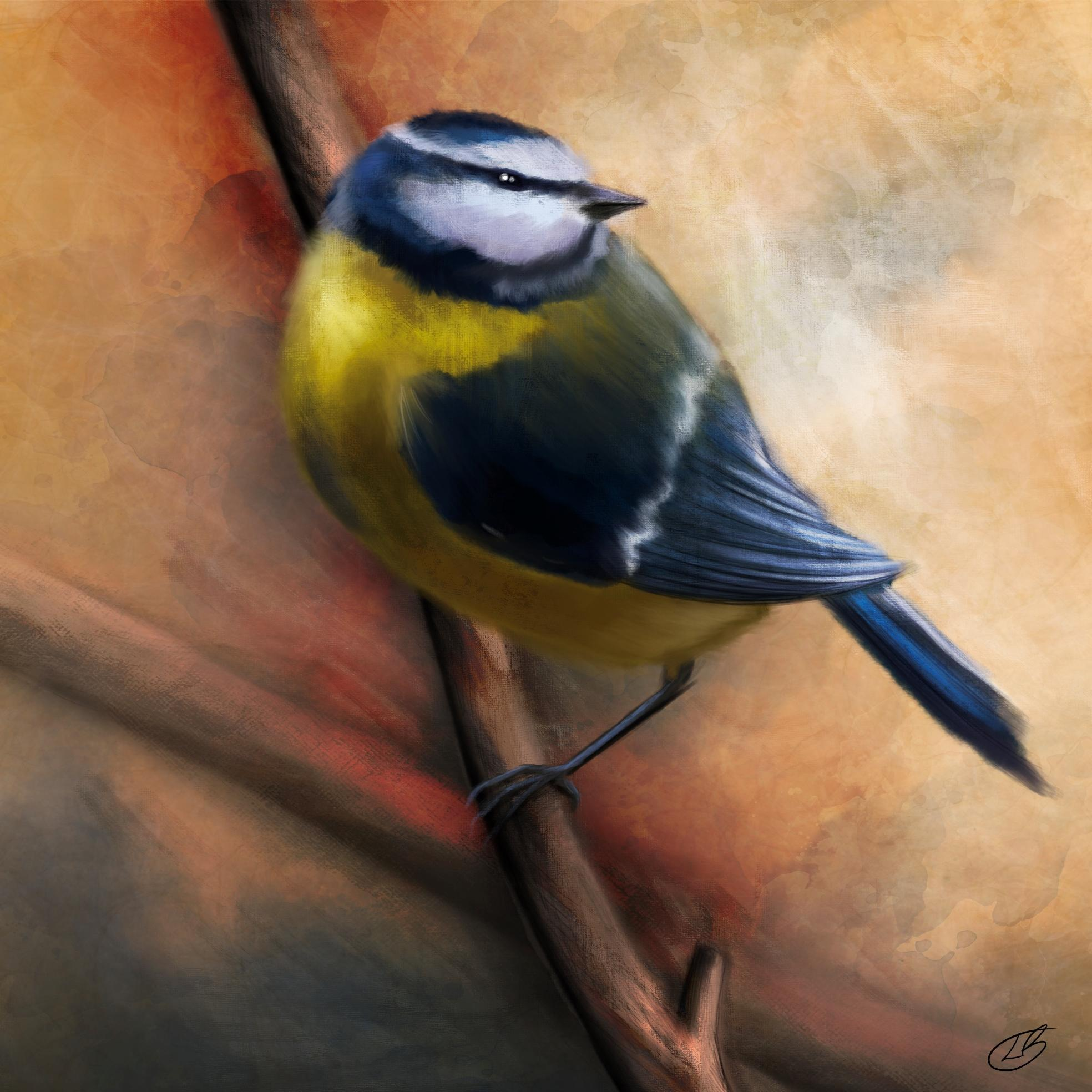 A digital painting by Lily Bourne of a Blue Tit. This yellow and blue bird is seen English gardens and throughout most of Europe. Seen in this painting on a small branch.