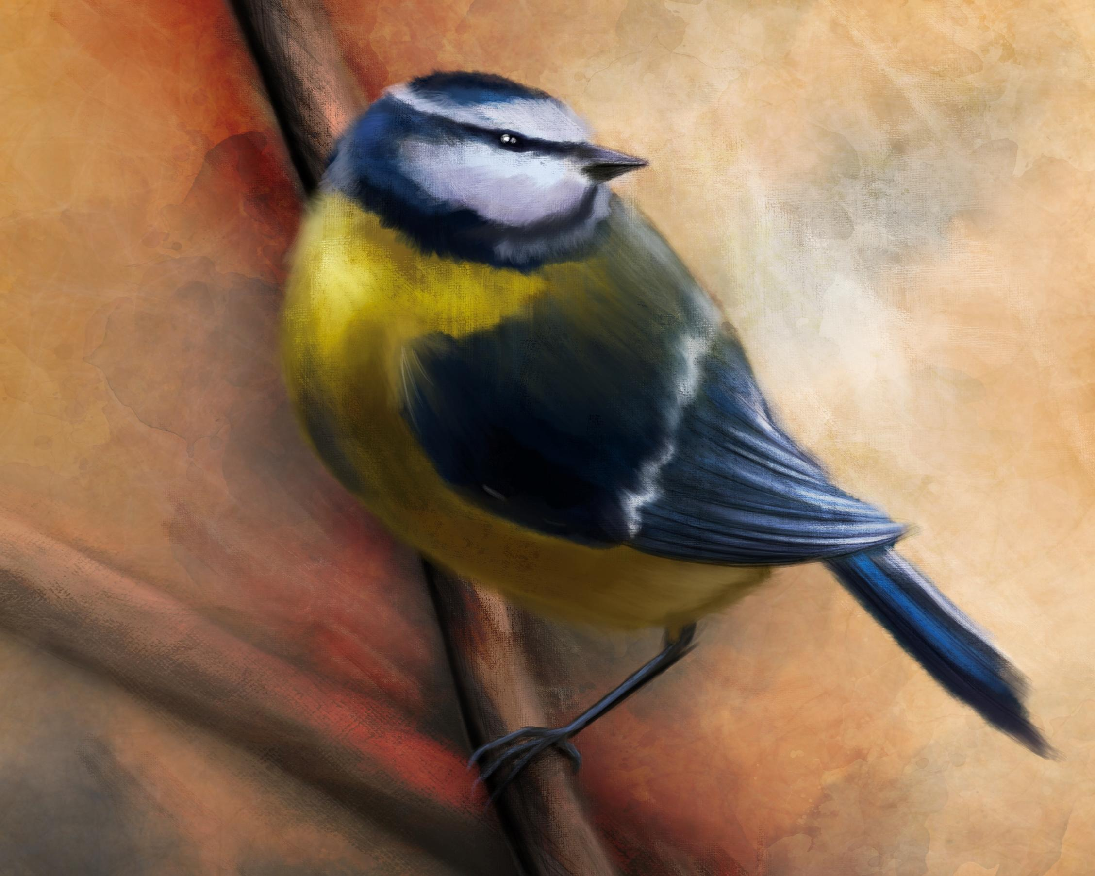 Close up of a digital painting by Lily Bourne of a Blue Tit. This yellow and blue bird is seen English gardens and throughout most of Europe. Seen in this painting on a small branch.