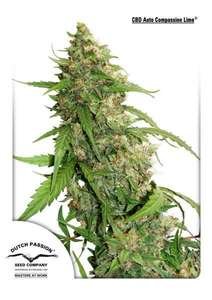 Dutch Passion Compassion Lime CBD Auto Feminised cannabis seeds