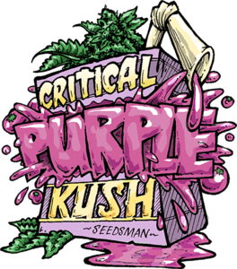 Seedsman Critical Purple Kush Feminised cannabis seeds