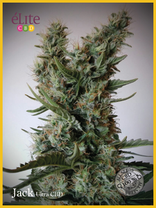 Elite Seeds Jack Ultra CBD Feminised cannabis seeds