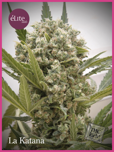 Elite SeedsLa Katana Feminised Seeds