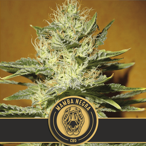 BlimBurn SeedsMamba Negra CBD Feminised Seeds