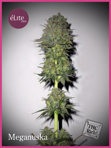 Elite Seeds Meganuska Feminised cannabis seeds