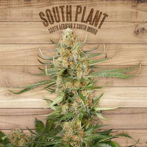 The PlantSouth Plant Feminised Seeds