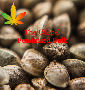 The Chapel feminised cannabis seeds