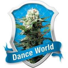 Royal Queen Seeds Dance World Feminised cannabis seeds