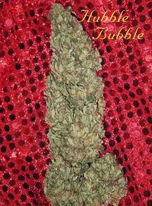 Mandala Seeds Hubble Bubble Feminised cannabis seeds