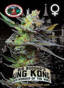 Big Buddha SeedsKing Kong Feminised Seeds