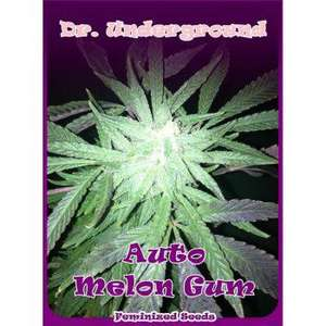 Dr UndergroundMelon Gum Auto Feminised Seeds