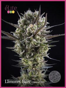 Elite Seeds Llimonet Haze Classic CBD Feminised cannabis seeds