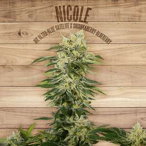 The Plant Nicole Feminised cannabis seeds