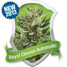 Royal Queen SeedsRoyal Cheese Auto Feminised Seeds