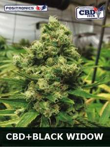 Positronic Seeds Black Widow CBD Feminised cannabis seeds