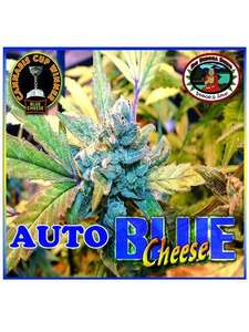 Big Buddha Seeds Blue Cheese Auto Feminised cannabis seeds