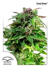 Dutch Passion Forest Dream Feminised cannabis seeds