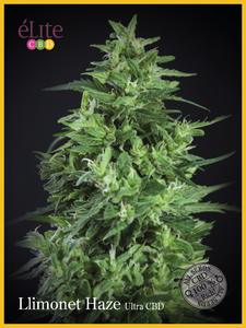 Elite Seeds Llimonet Haze Ultra CBD Feminised cannabis seeds