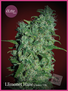 Elite Seeds Llimonet Haze Classic THC Feminised cannabis seeds