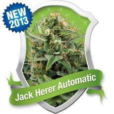 Royal Queen SeedsRoyal Jack Auto Feminised Seeds